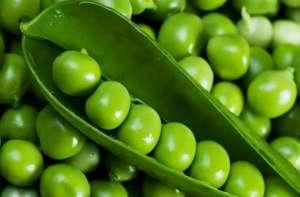 豌豆怎样种植 病虫害需重点防治